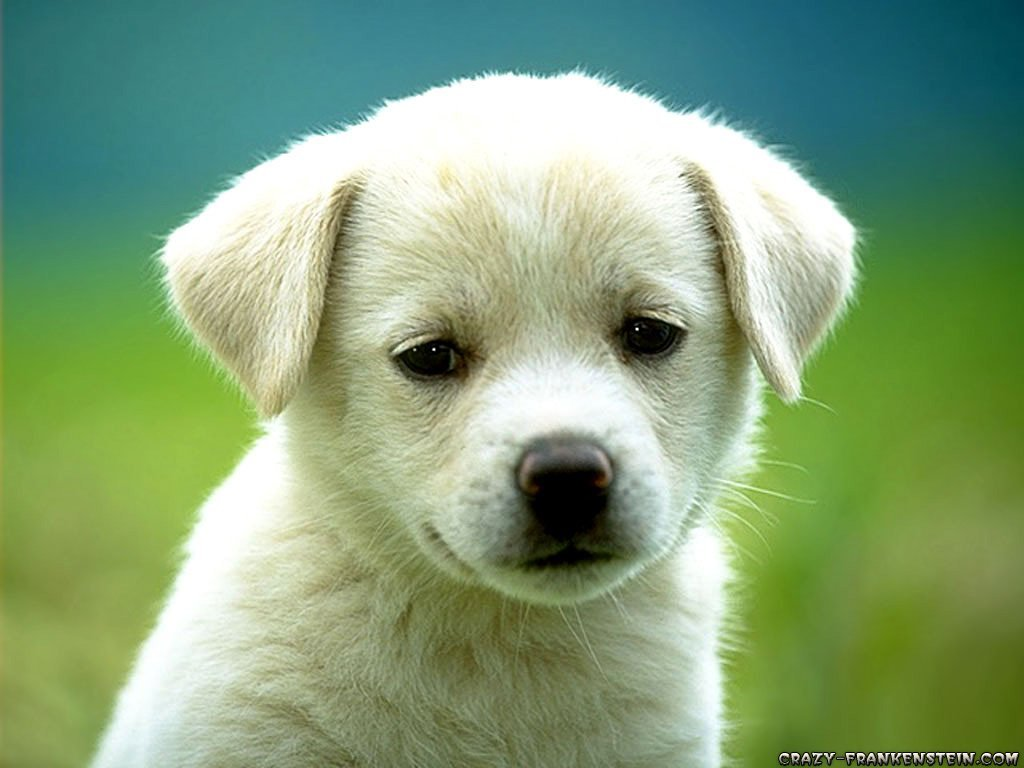 cute-puppy-dog-wallpapers%5B1%5D.jpg