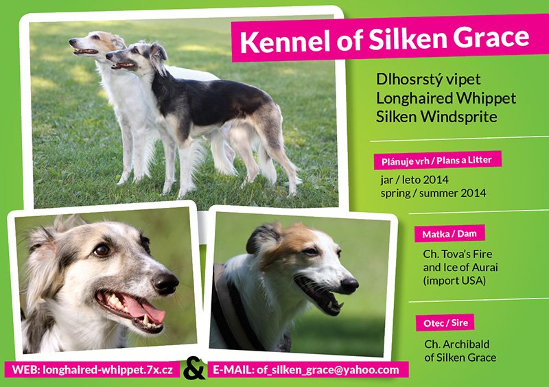 INZERAT Kennel-of-Silken-Grace-2.jpg